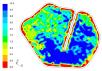 Residence Depth Distribution